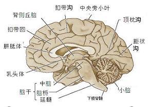 脑垂体瘤的早期症状